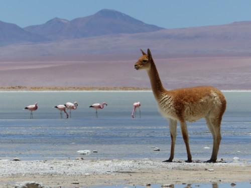 NORDCHILE – BOLIVIEN: Eine Reise der Superlative